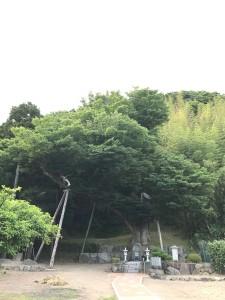 sadokeyaki1